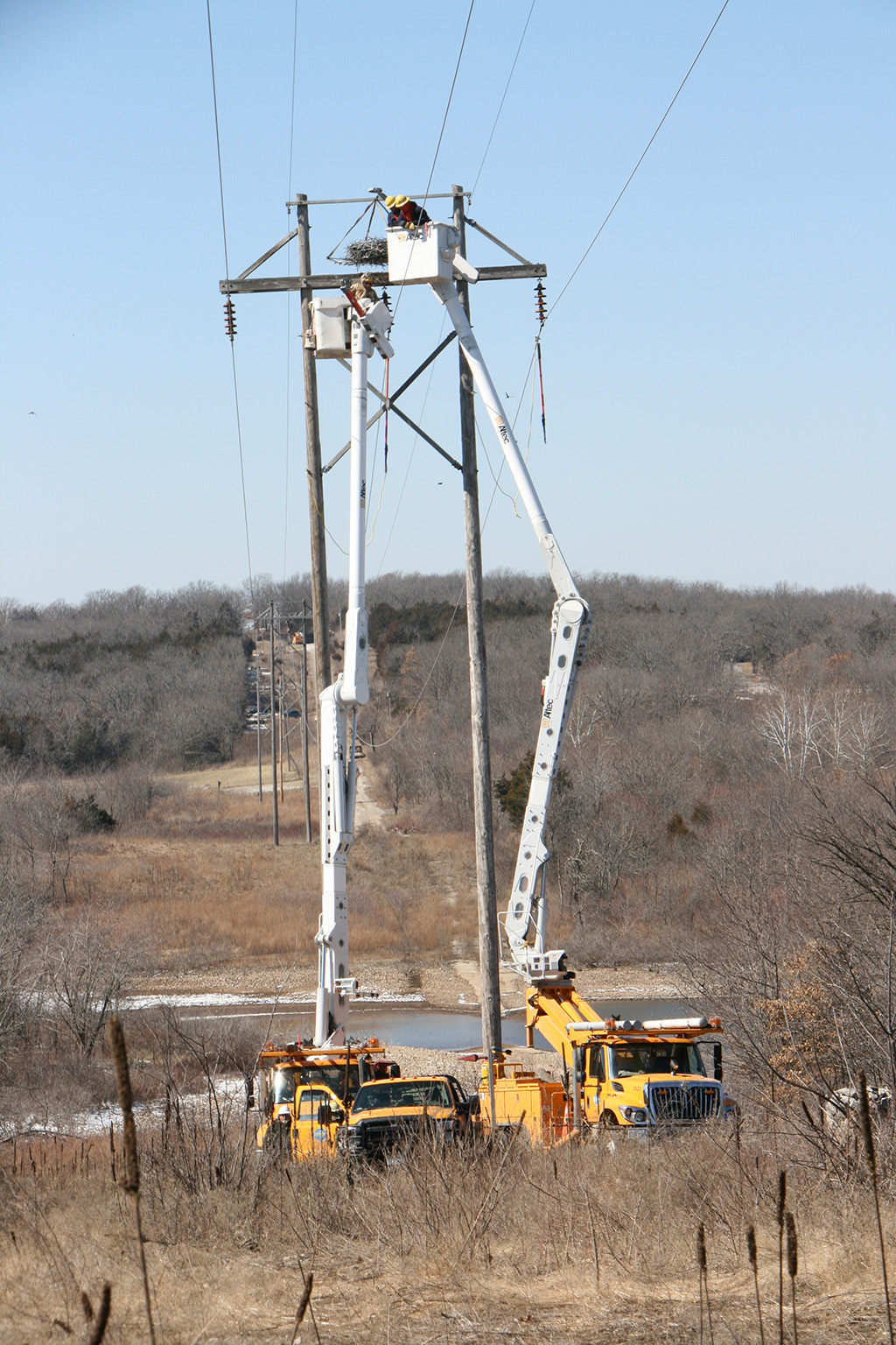 Removal of the osprey nest from the power structure.