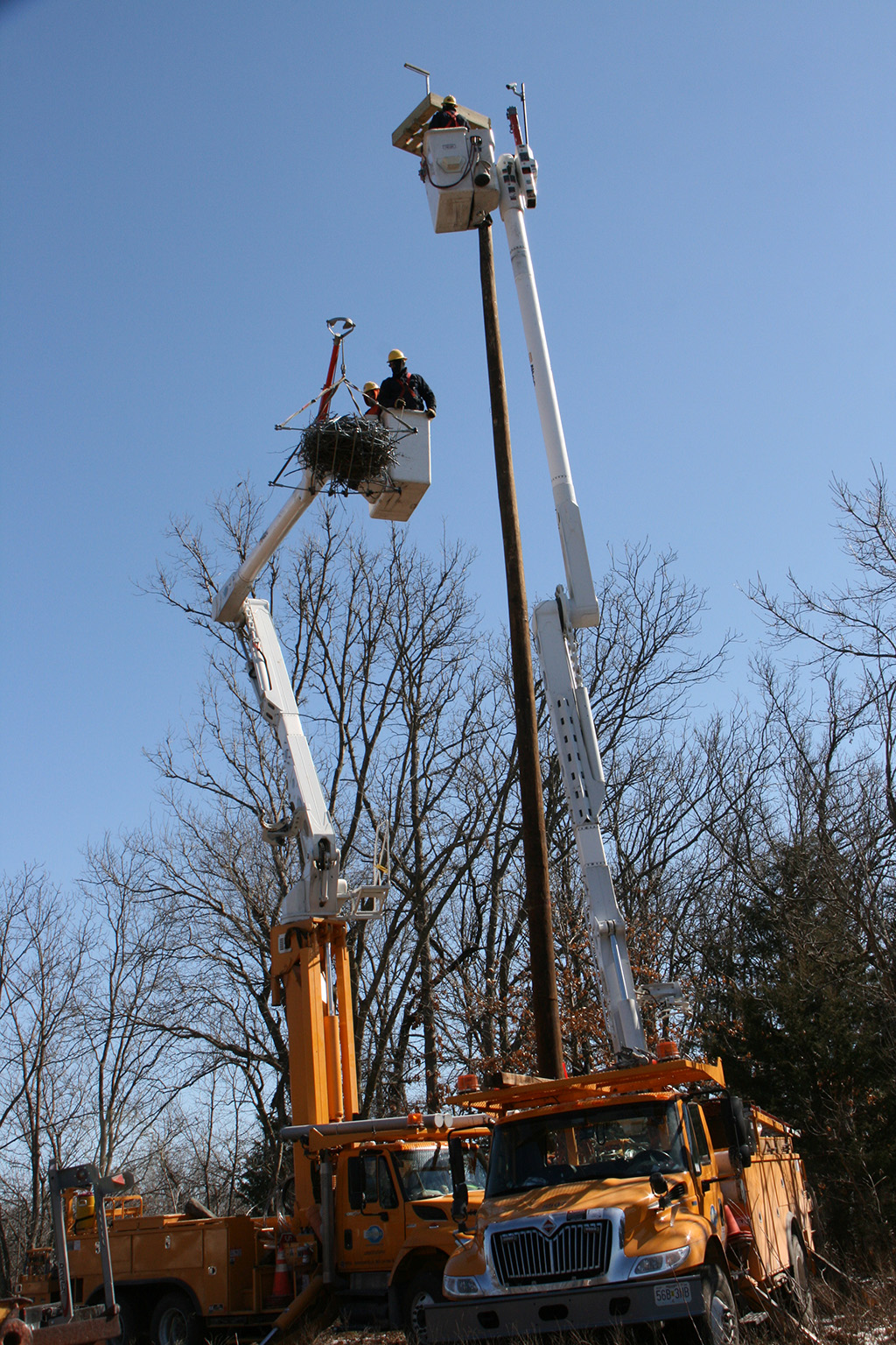 Lifting the osprey nest for the final installation.